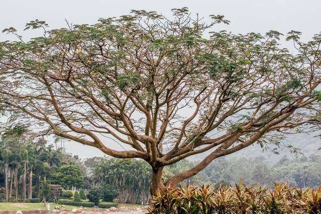 Дерево возле озера Inspiration