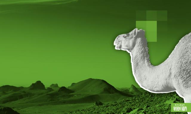 Алжир: политическая нестабильность — угроза региональной безопасности