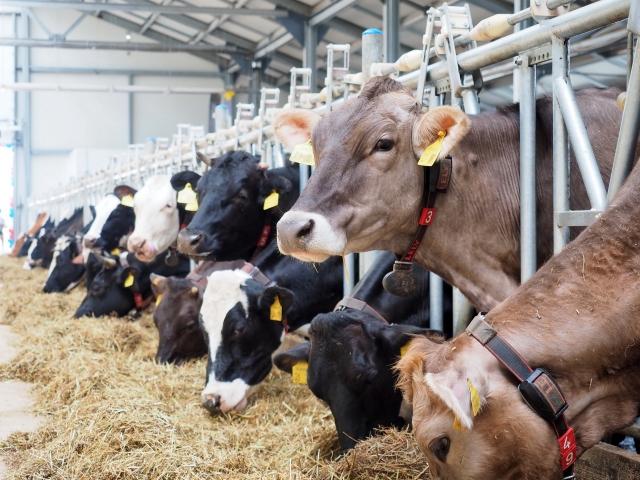 Более 345 тыс. тонн молока произведено в Калужской области за 2018 год