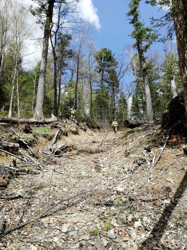 «Тёмный лес» Хабаровского края: отрасль погрязла в коррупции и воровстве
