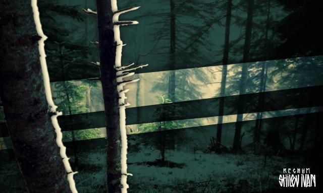 Более сотни воронежцев приняли участие в акции «Сохрани лес»
