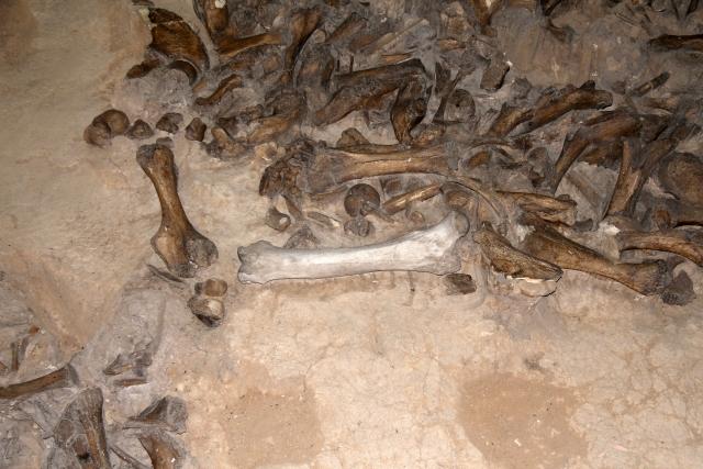 Одна из жемчужин музея — жилище первобытного человека, построенное из костей мамонта