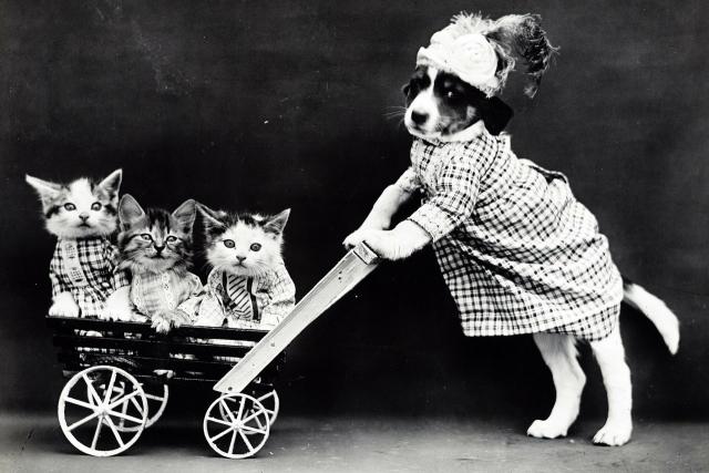 Кошки и собаки как новое поколение «человейников» Москвы