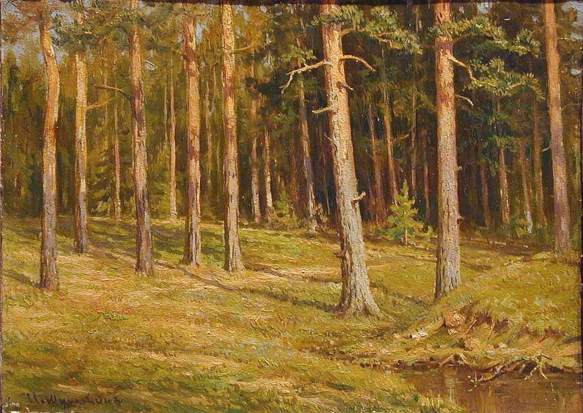 треугольная в сосновом лесу рисунок красота