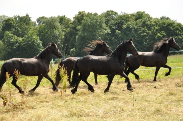 Конная распродажа: в Татарии на торги выставили племенных лошадей