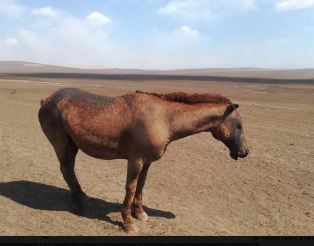 Очевидцы сообщают о десятках заживо сгоревших в Забайкалье животных