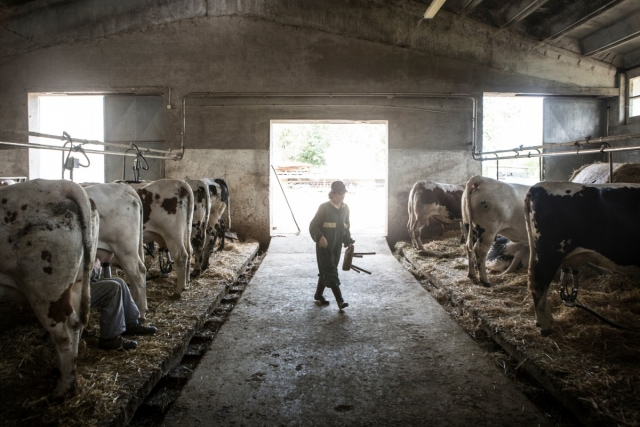 В Бурятии изменили правила господдержки молочной отрасли АПК