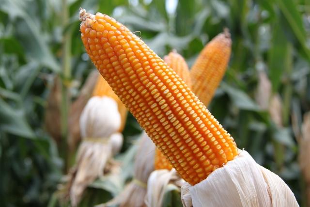 Аграрная Америка. Иллинойс