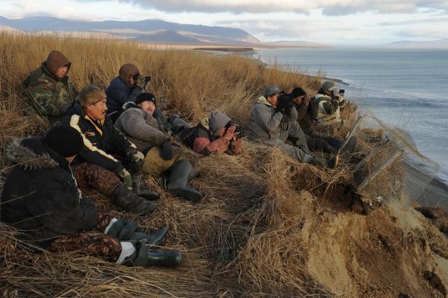 Каждое утро у морских охотников начинается одинаково – они «биноклируют» морское пространство в поисках какого-либо движения – моржей или серых китов