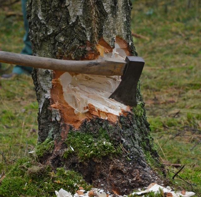 Лесной гигант Хабаровского края – ООО «Азия Лес» — идёт к банкротству