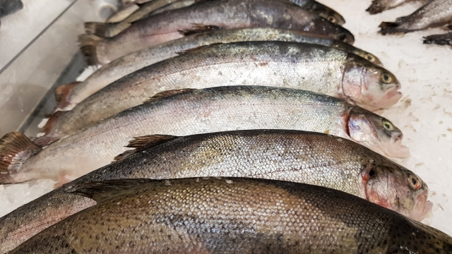 30%-ную скидку на рыбу пообещал мурманчанам врио губернатора