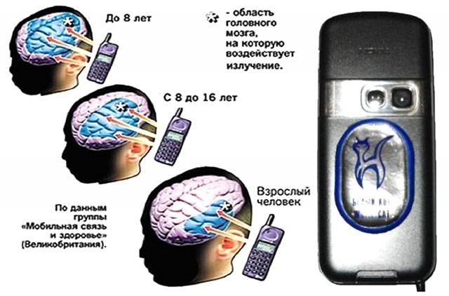 Распределение поглощенной энергии в головном мозге взрослого и у детей разного возраста при использовании мобильного телефона