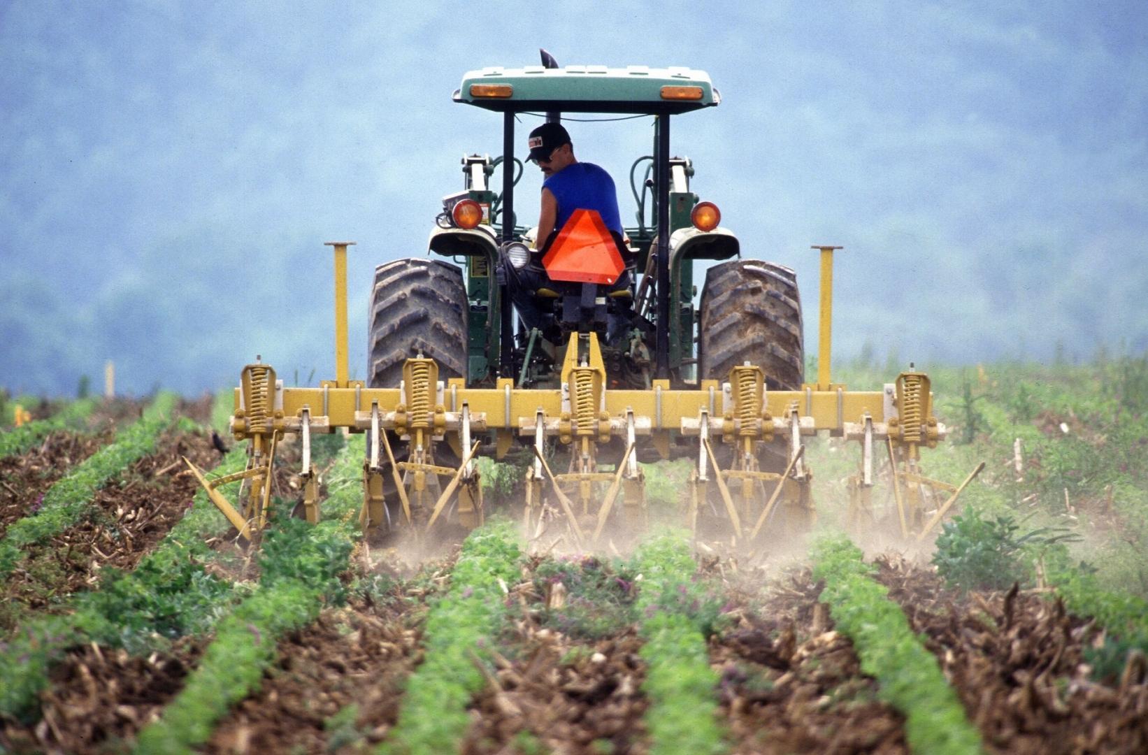 Бурно развивающееся сельское хозяйство Камчатки: кг помидоров — 900 рублей  - ИА REGNUM