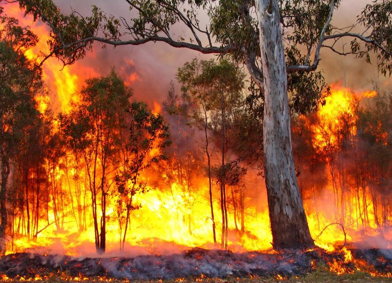 В Якутии не тушат 95 лесных пожаров из 107: за сутки выгорело 276 тыс. га -  ИА REGNUM