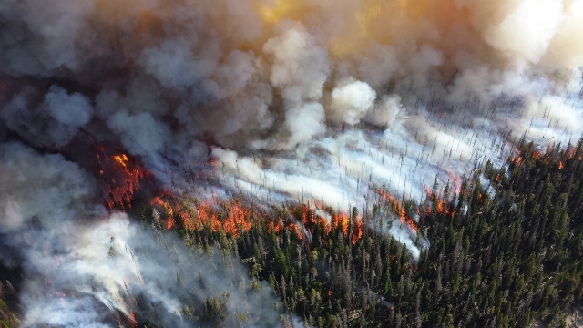 Лесные пожары: пример технологии создания демонов для давления на власть