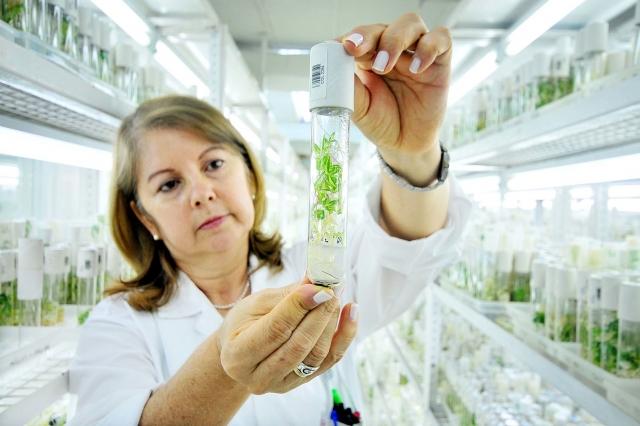 Образцы растений в генном банке