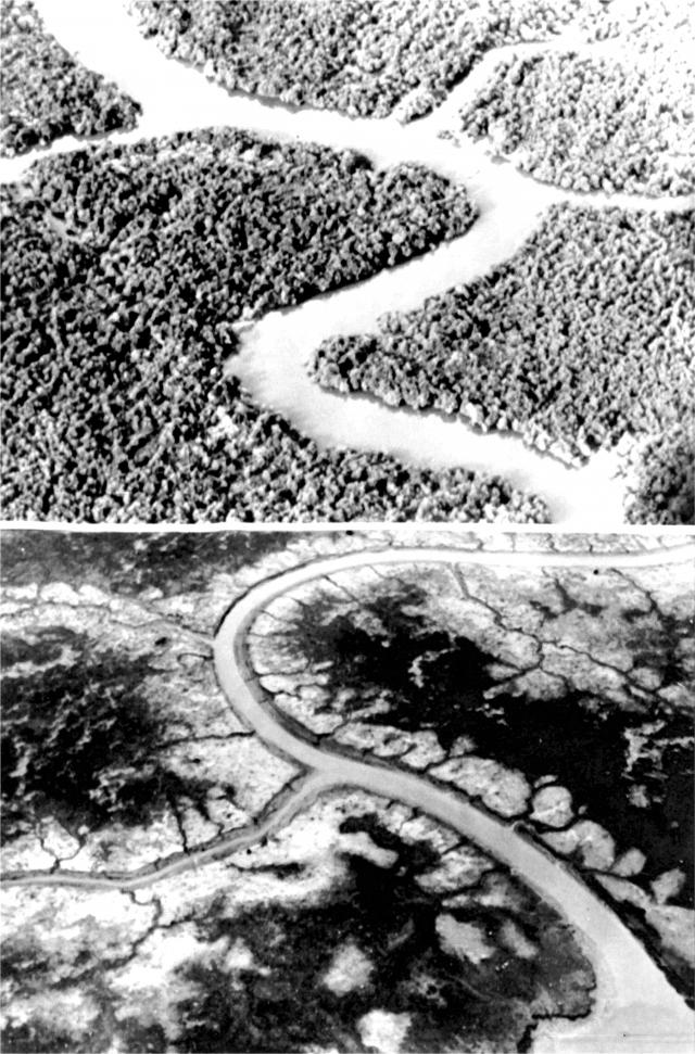 Район джунглей в Южном Вьетнаме до и после обработки Agent Orange