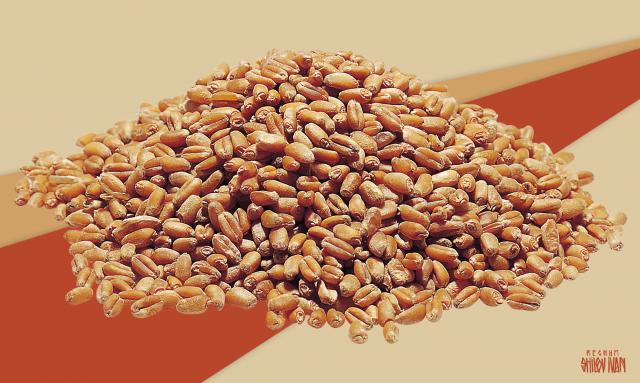Украина теряет рекордный урожай: зерно невозможно доставить в порты