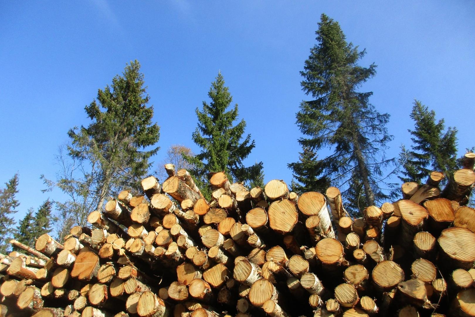 грелку вырубают деревья картинки решил быть честным