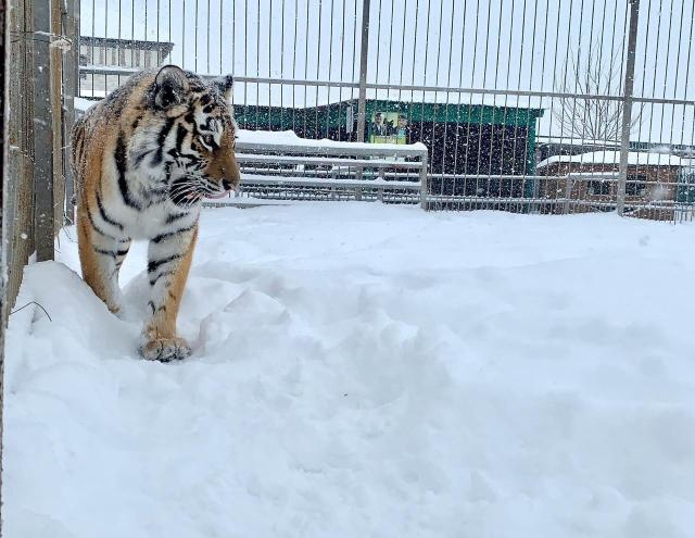 Питомцы зоопарка «Чудесный» встретили снегопад