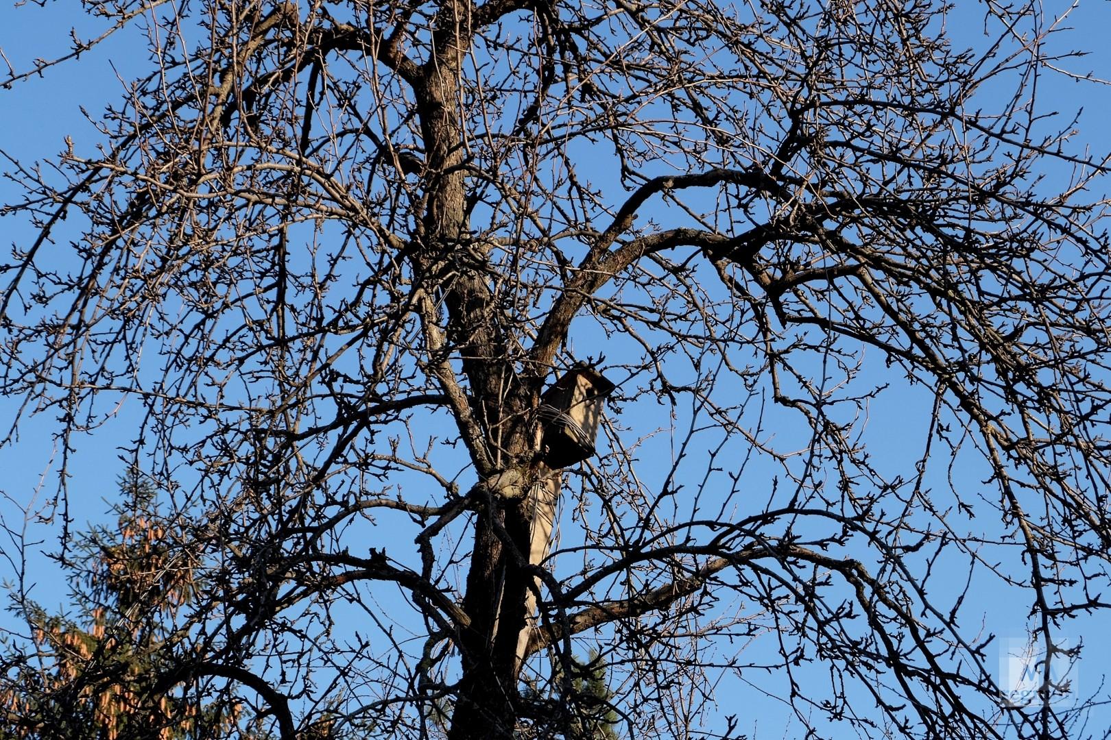Скворечник на дереве рядом с салтыковской эстакадой