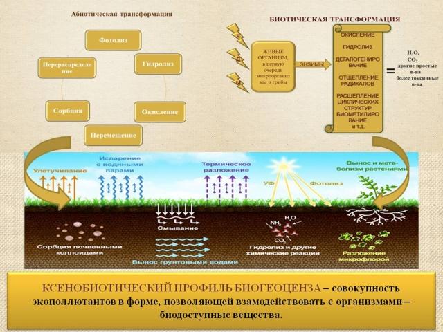 Рис. 9. Ксенобиотичский профиль биогеоценоза