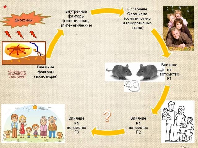 Рис. 21. Факторы, от которых зависит воздействие диоксинового загрязнения на потомство