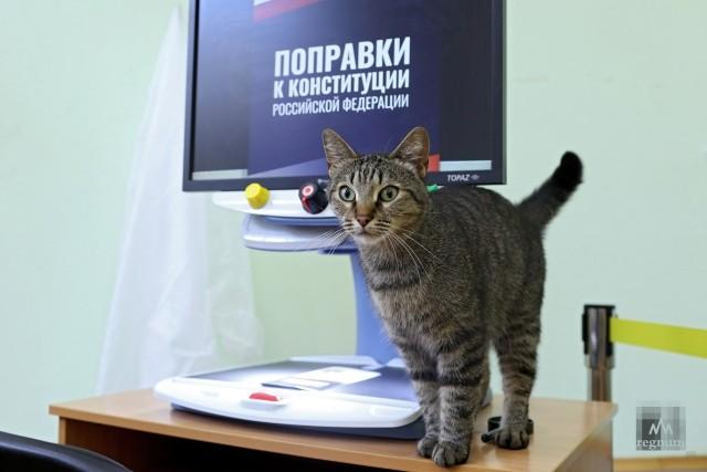 Избирательный участок №2214 во время единого дня голосования по поправкам к Конституции РФ