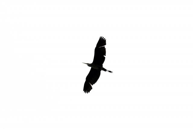 Птицы в заказнике