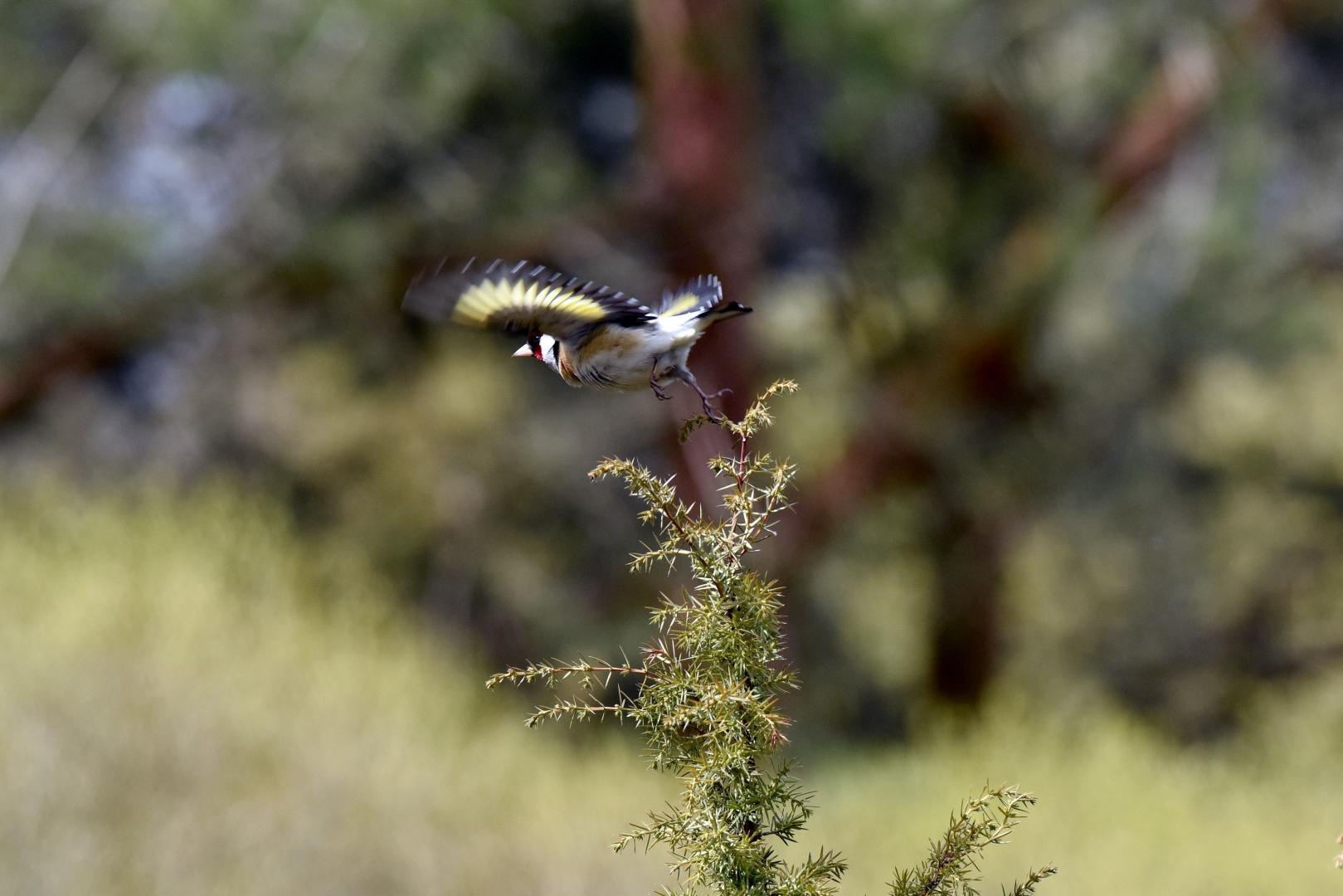 Птицы Кугальского заказника