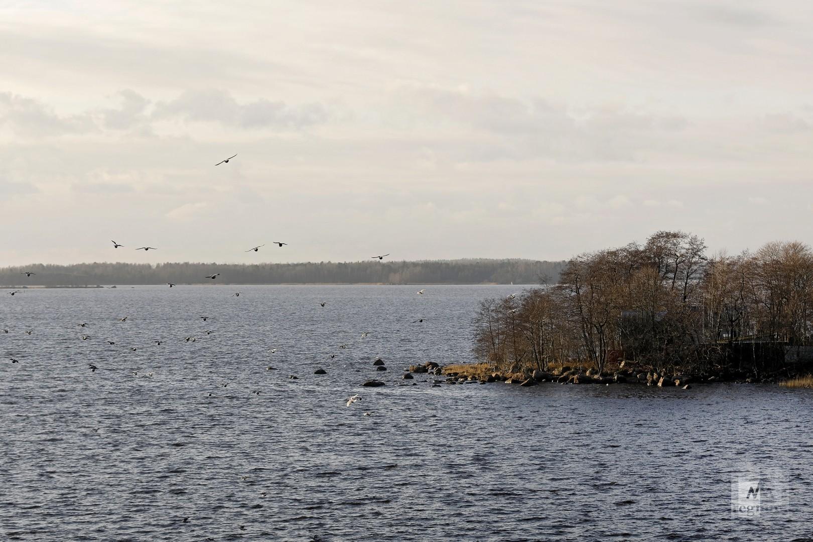 Выборгский залив