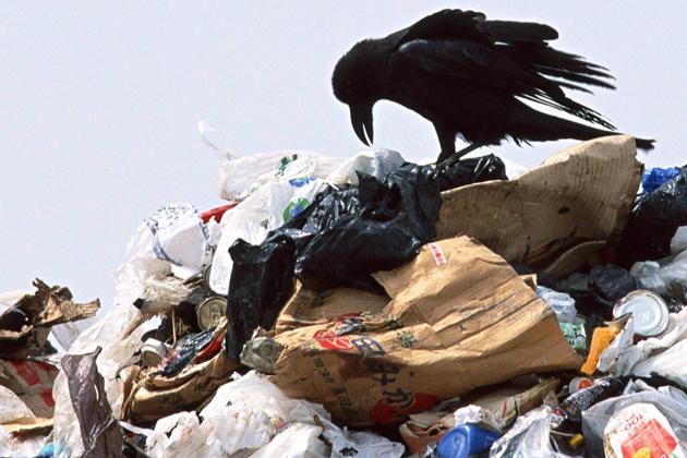 Грядущую «мусорную» проверку Минприроды РФ назвали неадекватной
