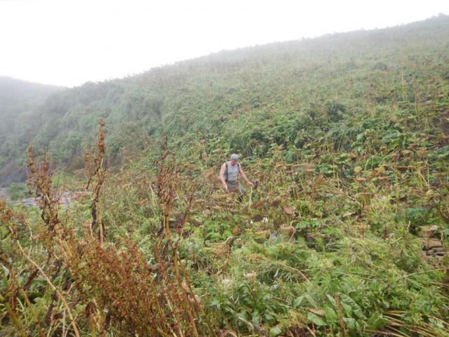 Растительность на острове Зорге