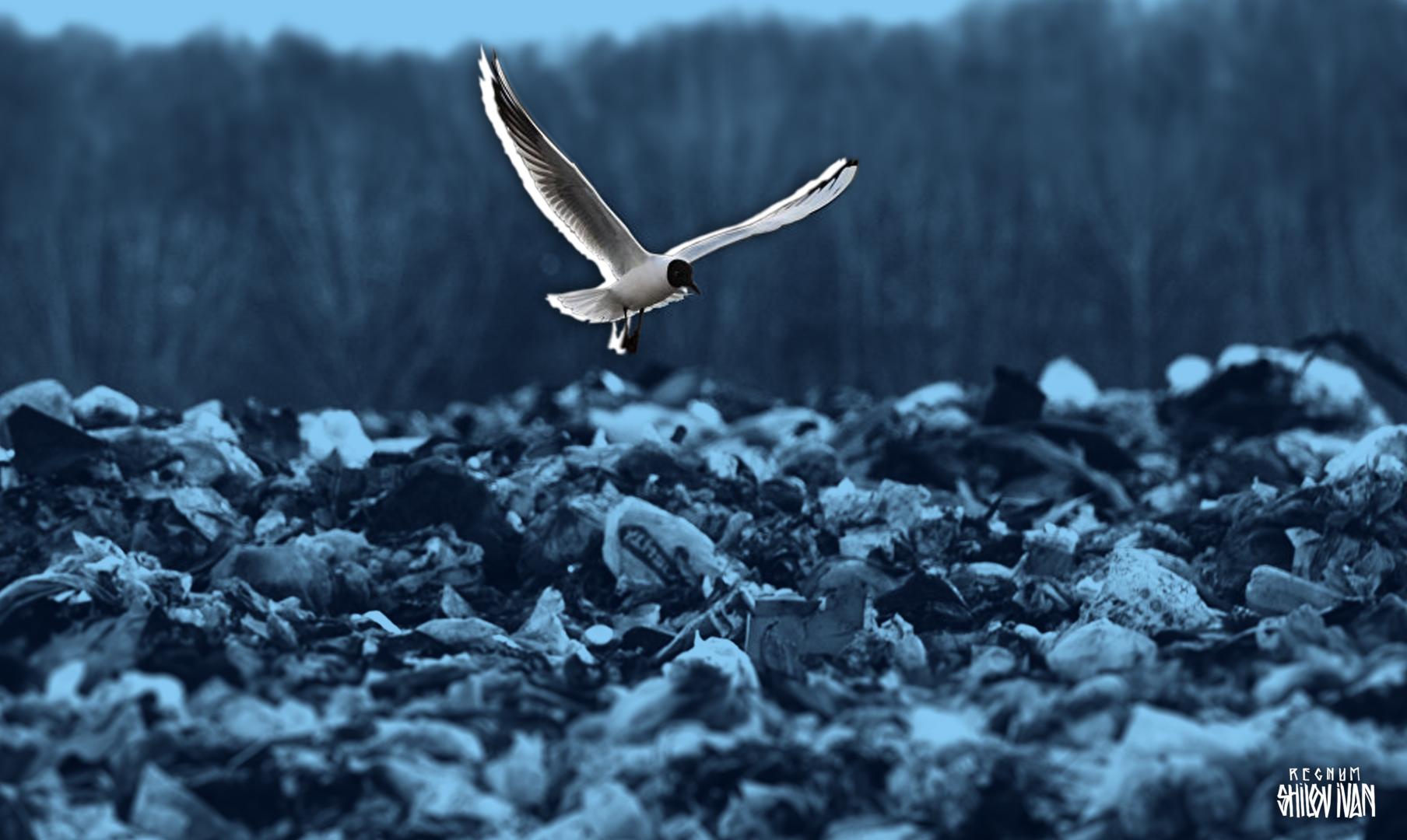 Почему в РФ не получится заварить мусоропроводы: «Где найти земли и денег?»