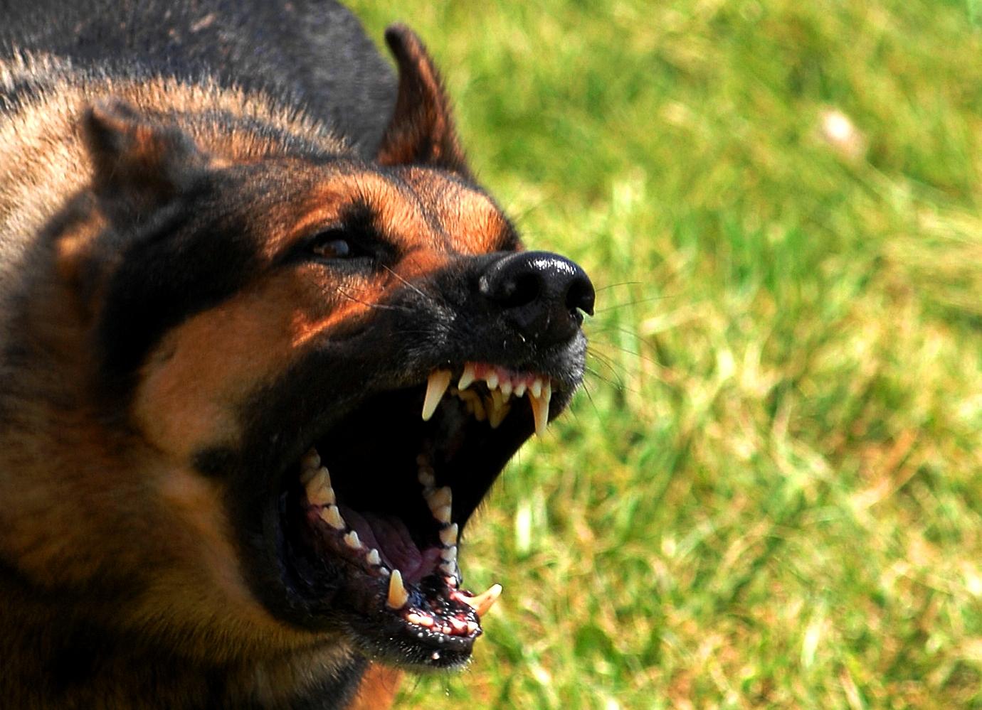 Собак в Бурятии могут приравнять к источникам повышенной опасности