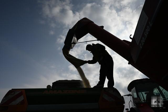 Наполнение бункера для внесения аммиачной селитры в почву для лучшего кущения