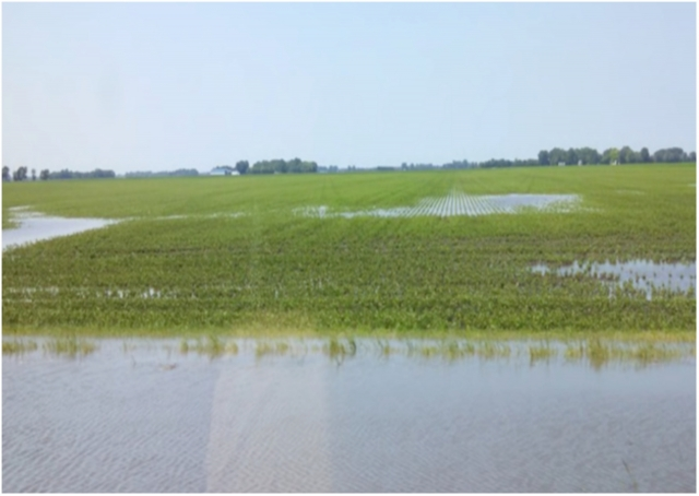 Рис. 7. Застой воды на полях с уплотненной почвой