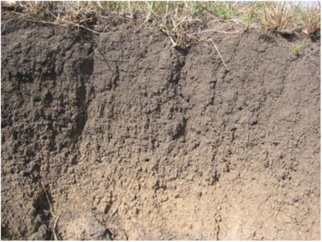 Рис. 8. Почва с нормальной природной структурой