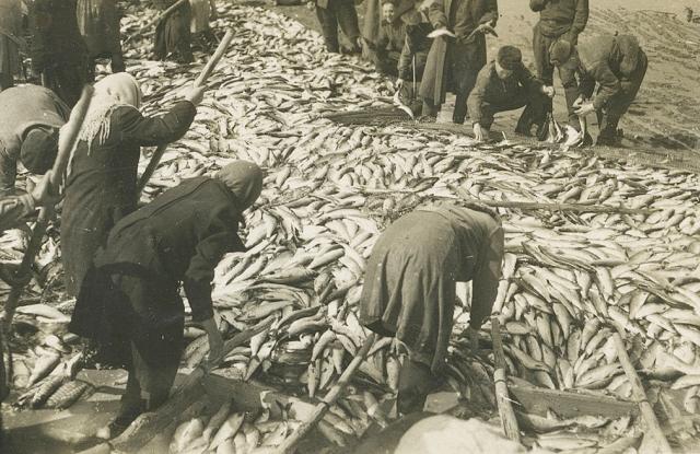 «Сколько рыбы у нас!». Остров Сахалин. 1953
