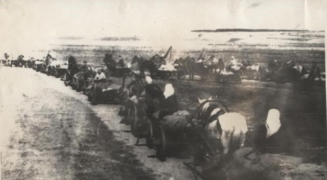 Вурнарский районный обоз с хлебом для сдачи государству. Чувашаская АССР. 1944